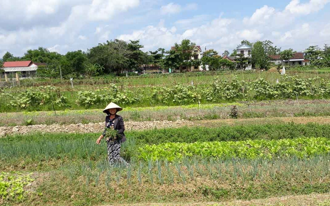 Going Local in Rural Vietnam – Hue and Hoi An