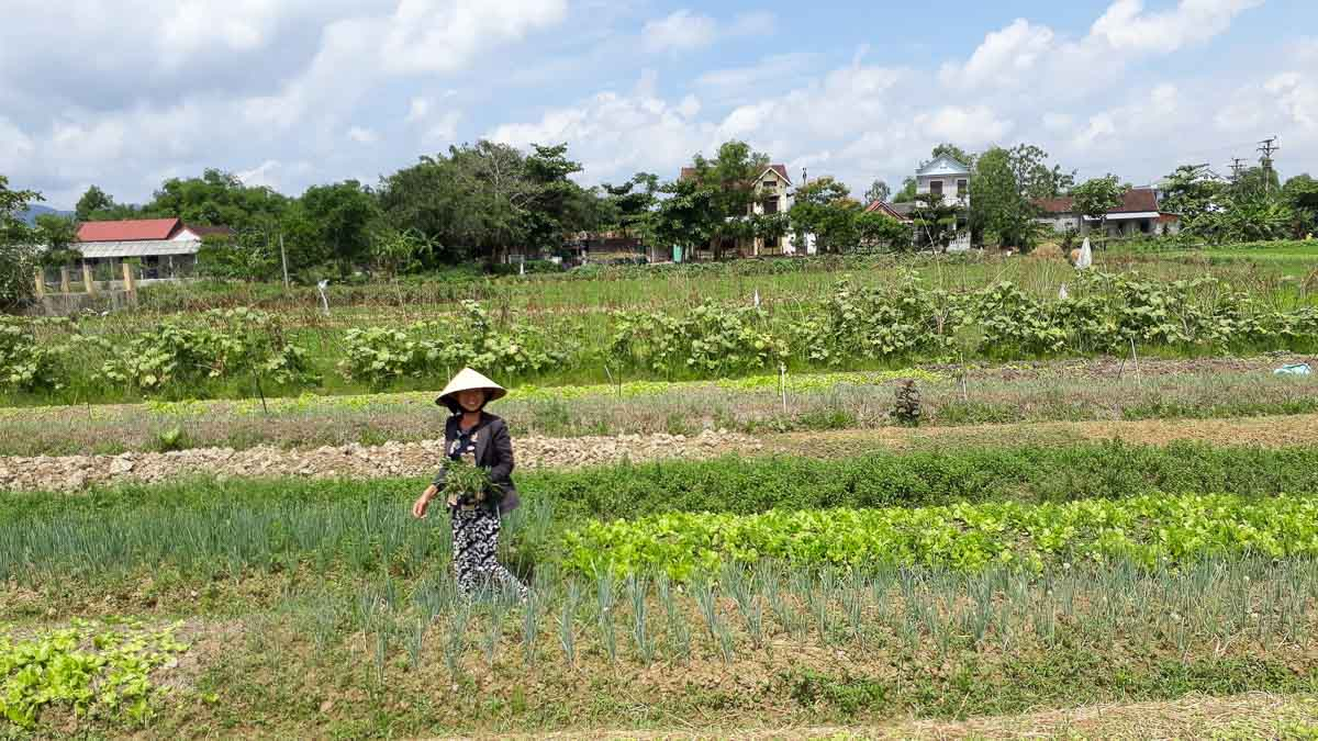 Going Local in Rural Vietnam - Hue and Hoi An | Lily's Travel & Tours